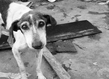 Albo regionale delle Associazioni di Protezione animali