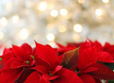 Volontariato, per Natale tanto online ma non solo